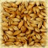 Cara Clair malt 8 EBC Castle Malting 1kg(Carapils)